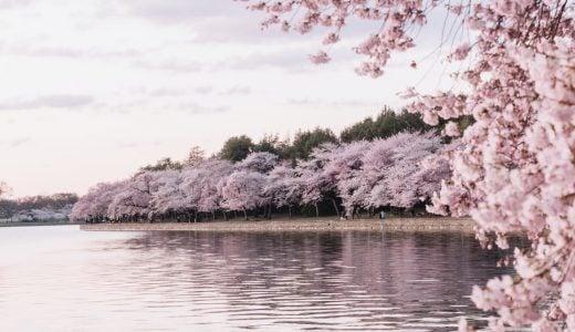 いつまでも心に残る桜が印象的な映画12選